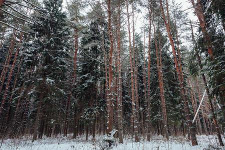 Красивый лес, покрытый снегом, Россия