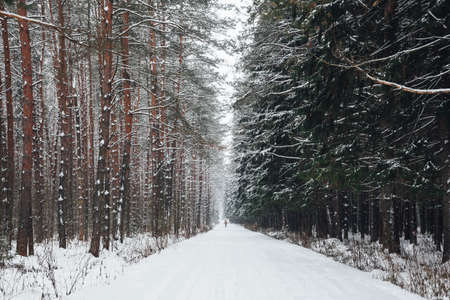 Young man walks on a winter forest road covered with snow