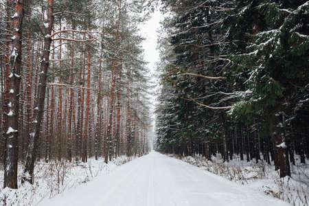 Зимняя лесная дорога, покрытая снегом в сельской России