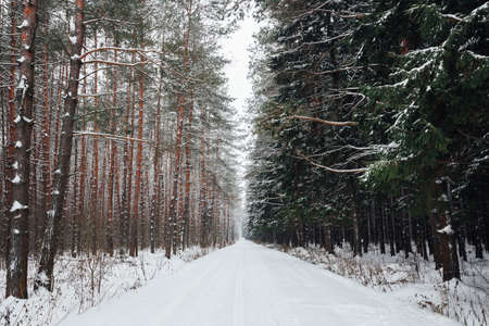 Winter forest road covered with snow in a rural Russia