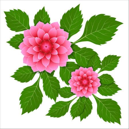 Dahlia pink flower. Vector illustration