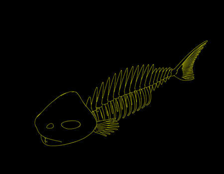 Fish skeleton. Isolated on black background. Vector outline illustration.
