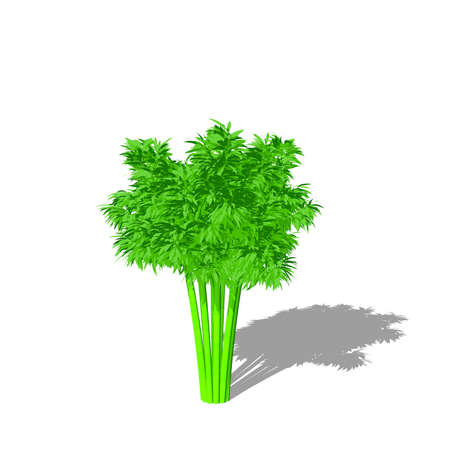 Bamboo tree. Isolated on white background. 3D rendering illustration. Cartoon style. Stock Photo