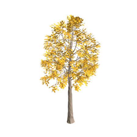 아스펜 나무. 흰 배경에 고립. 3d 벡터 일러스트 레이 션. 스톡 콘텐츠 - 99142348
