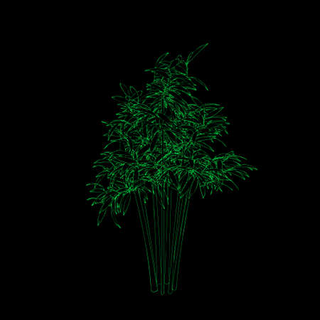 Bamboo tree. Isolated on black background. Vector outline illustration.