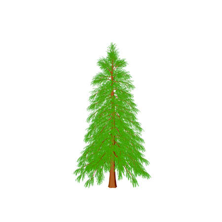 Abies tree. Isolated on white background. 3D rendering illustration. Cartoon style. Stock Photo