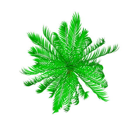 Palm tree. Isolated on white background. 3d Vector illustration. Top view.