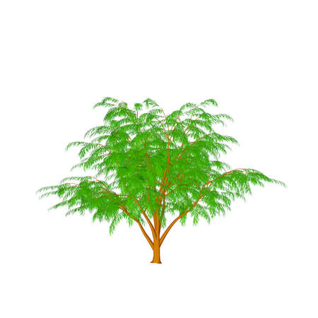 Albizia tree. Isolated on white background. 3D rendering illustration.Cartoon style.
