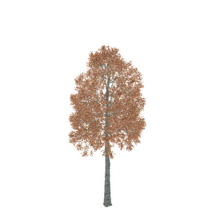 Aspen tree. Isolated on white background. Vector illustration. Pointillism style.
