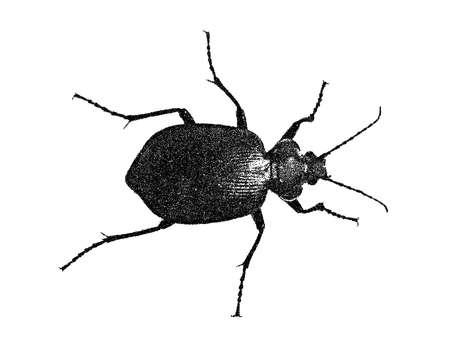 Bug. Isolated on white background. Vector illustration. Pointillism style.