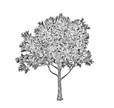 Apple tree. Isolated on white background. Sketch illustration. Stock Photo