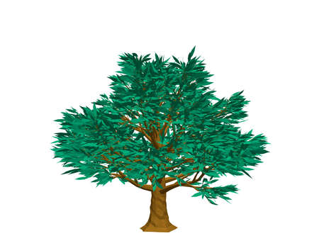 Beech tree. Isolated on white background. 3d Vector illustration.