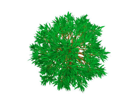 Beech tree. Isolated on white background. 3d Vector illustration. Top view.