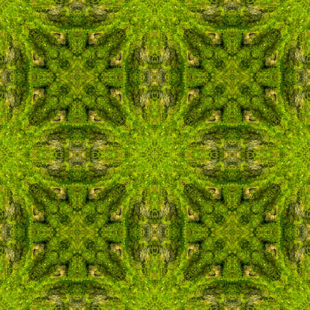 Abstract decorative green moss background. Seamless pattern.