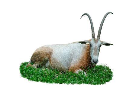 Oryx gazella. Isolated on white background. Vector illustration. Pointillism style.