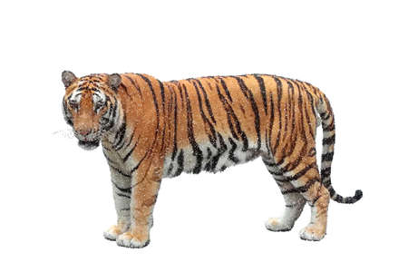 Tiger. Isolated on white background. Vector illustration. Pointillism style.