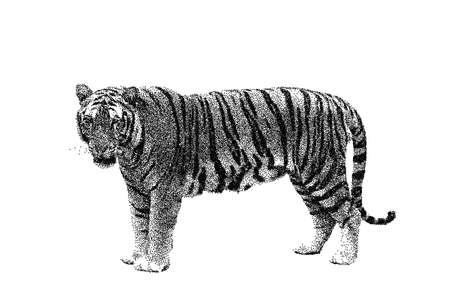 Tiger. Isolated on white background. Vector illustration. Sketch style.