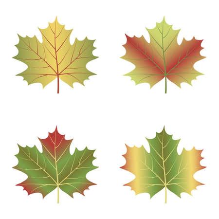 maple leaf set isolated on white background. Vector illustration.