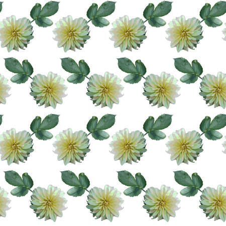 Seamless pattern with white Dahlia flowers and green leaves on white background. Endless floral texture. Raster illustration.