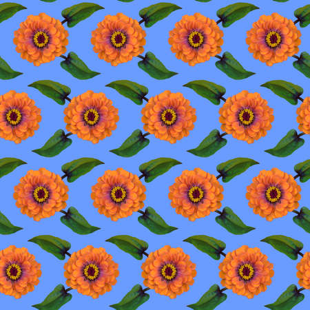 Seamless pattern with orange Zinnia flowers and green leaves on blue background. Endless colorful floral texture. Raster illustration.