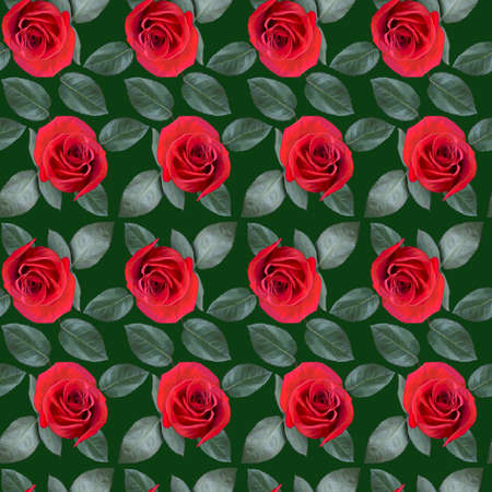 Seamless pattern with red rose flowers and green leaves on green background. Endless colorful floral texture. Raster illustration.