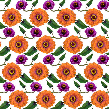 Seamless pattern with orange, purple Zinnia flowers and green leaves on white background. Endless colorful floral texture. Raster illustration.