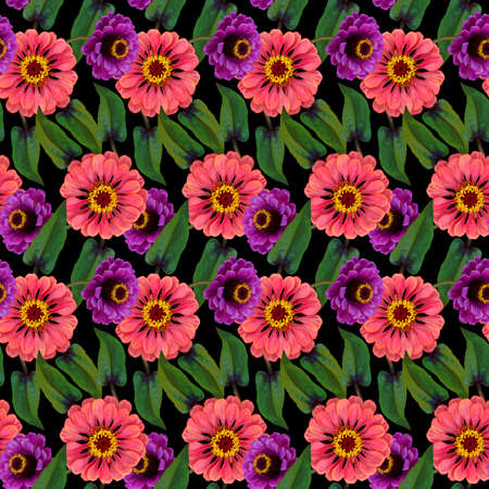 Seamless pattern with pink, purple Zinnia flowers and green leaves on black background. Endless colorful floral texture. Raster illustration.