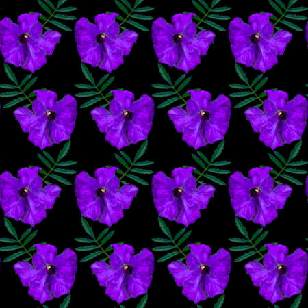 Seamless pattern with purple Petunia flowers and green leaves on black background. Endless colorful floral texture. Raster illustration.