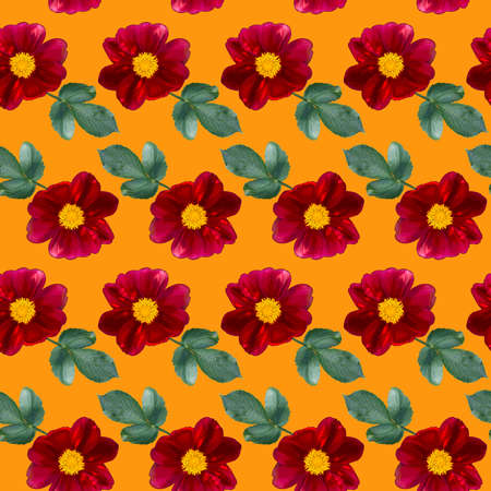 Seamless pattern with red Dahlia flowers and green leaves on orange background. Endless floral texture. Raster colorful illustration.