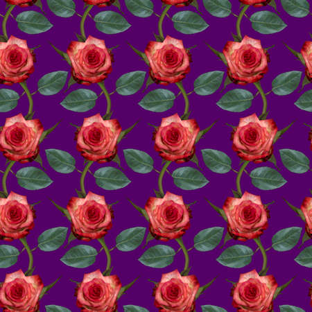 Seamless pattern with pink rose flowers and green leaves on purple background. Endless colorful floral texture. Raster illustration. Stock fotó