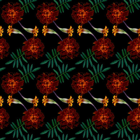 Seamless pattern with brown Tagetes patula (French marigold) flowers and green leaves on black background. Endless colorful floral texture. Raster illustration.