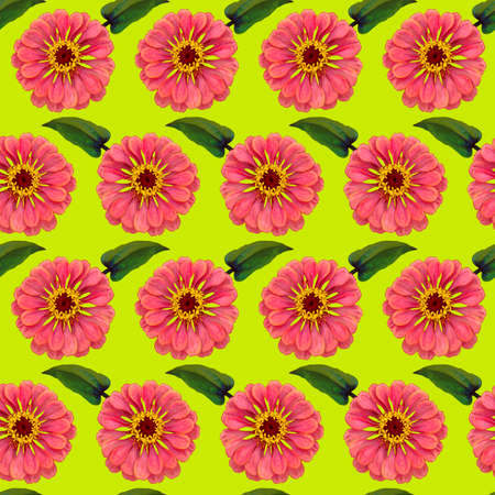 Seamless pattern with pink Zinnia flowers and green leaves on yellow background. Endless colorful floral texture. Raster illustration.