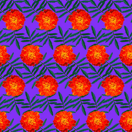 Seamless pattern with orange Tagetes patula (French marigold) flowers and green leaves on blue background. Endless colorful floral texture. Raster illustration.