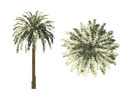 Pixelated Palm phoenix tree. Pixel Art Vector illustration. Isolated on white background. Top view.