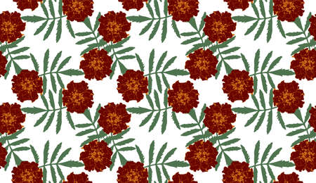 Seamless pattern with brown Tagetes patula (French marigold) flowers and green leaves on white background. Endless colorful floral texture. Vector illustration.