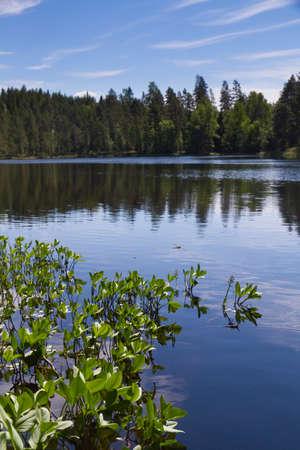 plantas acuaticas: Lago en el tiempo de verano con plantas de agua en primer plano
