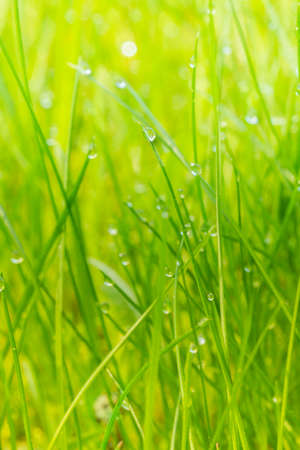 Closeup of green grass with morning dew in portrait mode