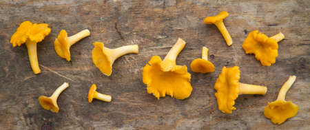 loosely: Loosely arranged yellow chantarelles on wooden plank.