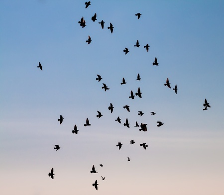 A large group of pigeons against the sky   Stock Photo - 18526114