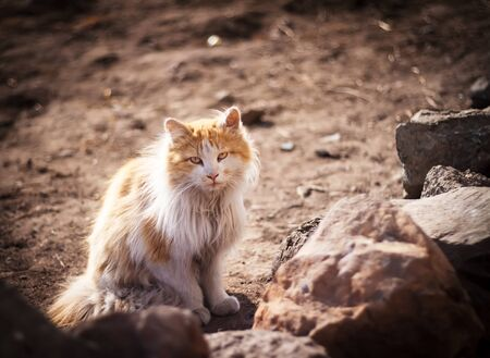 Stray cat sit on asphalt. Soft focus. photo