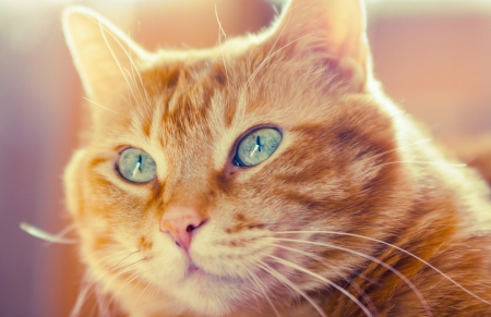 Lovely red cat looking somewhere  Soft focus Stock Photo - 19185111