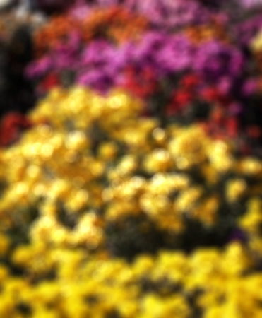 Abstract background with bokeh defocused flowers.  photo