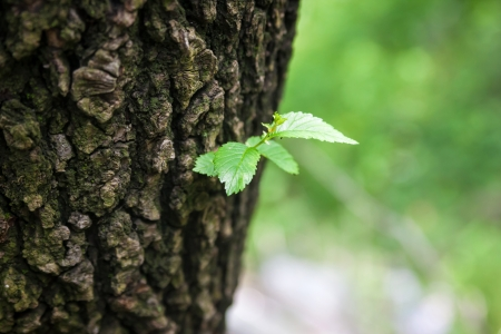 Single green leaf on tree. New life, conceptual photo.