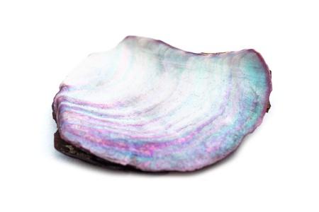 Close-up of nacre seashell on white background