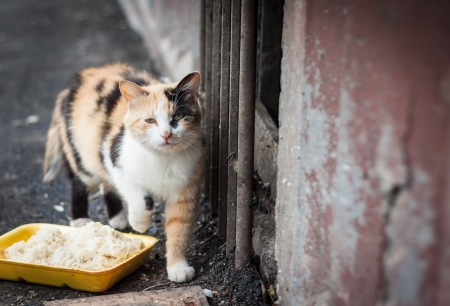 Stray cat and box with food photo
