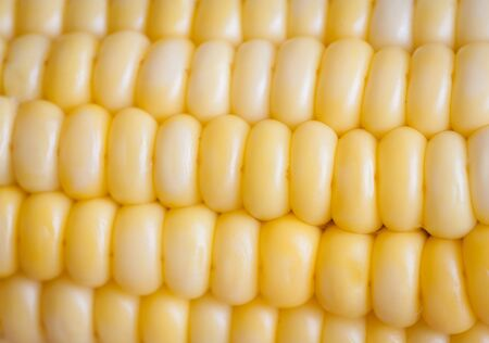 Yellow corn background, shallow depth of field  Selective focus   photo