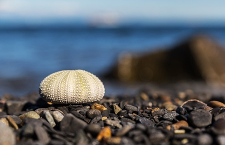 Sea urchin on beach  With selective focus on Sea urchin   photo