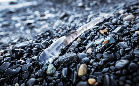 촉수:  Tentacle of jellyfish on the beach  Selective focus with shallow depth of field  스톡 사진