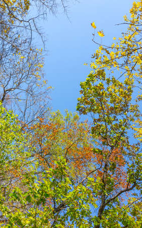 Tree canopy in autumn forest against the blue sky  photo