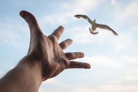worship white:   Hand of a man reaching to bird in the sky  Selective focus on a bird   Stock Photo
